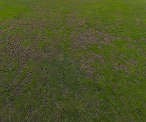 grass-brown-spots
